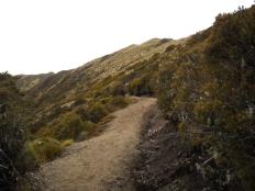 118 Kepler track above treeline